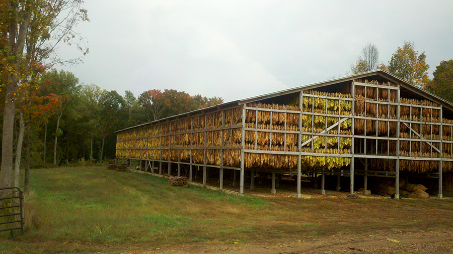 Drying Tobacco at Red Hill Farms